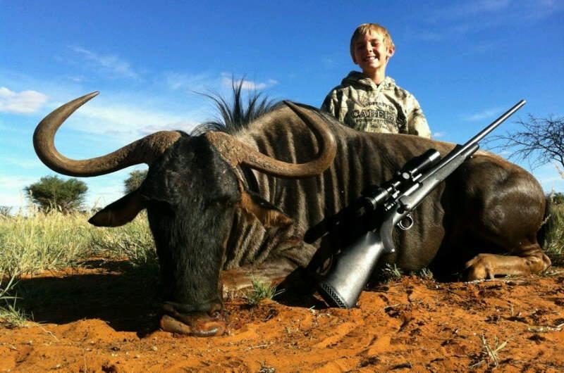wildebeest-blue-3