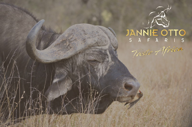 Jannie Otto Safaris  2020